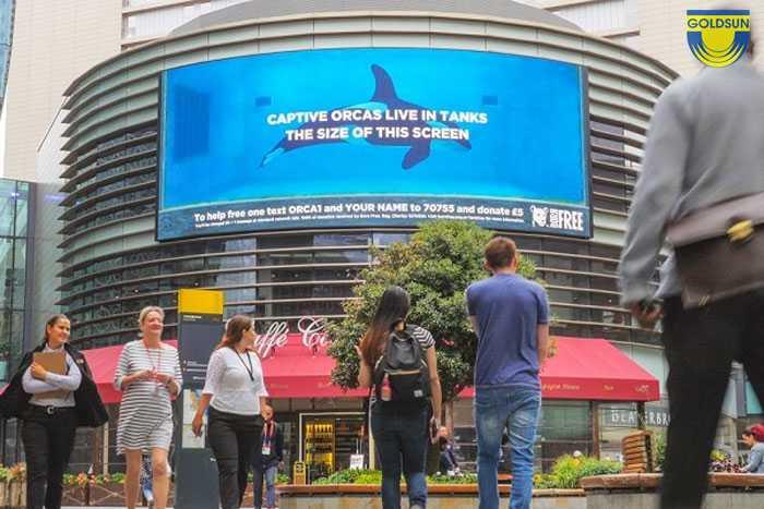 Hình ảnh quảng cáo cho chiến dịch quyên góp nhân ngày cá voi sát thủ